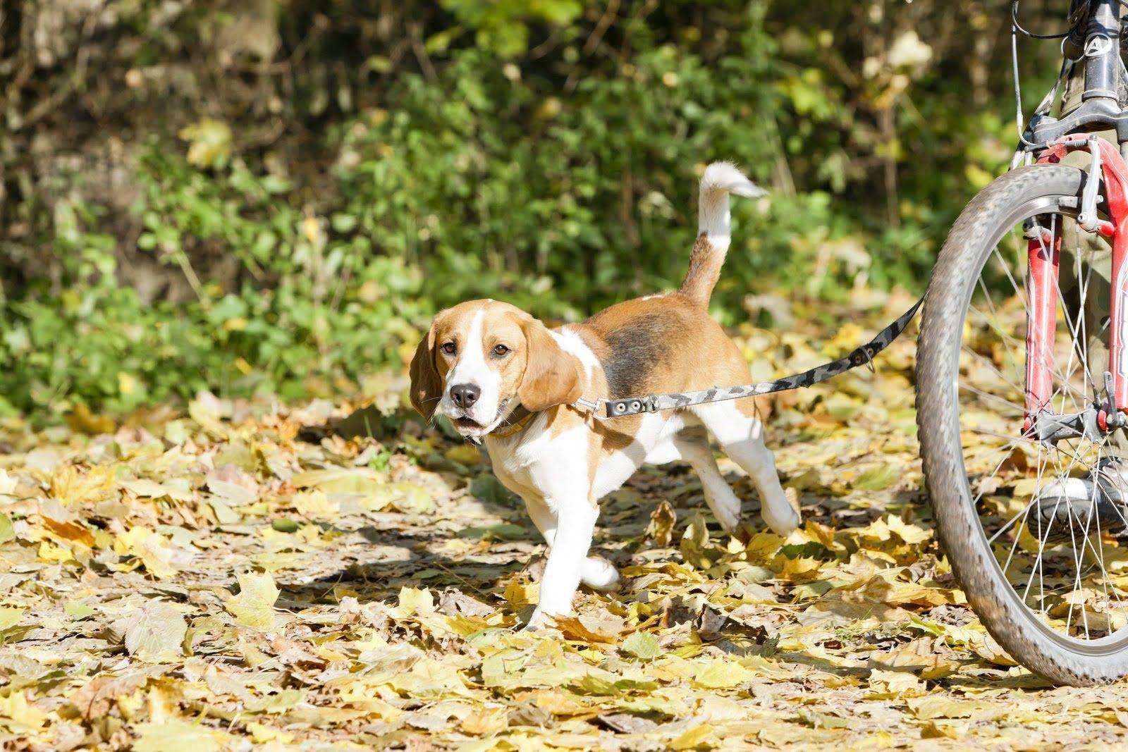 Dog on leash crate training