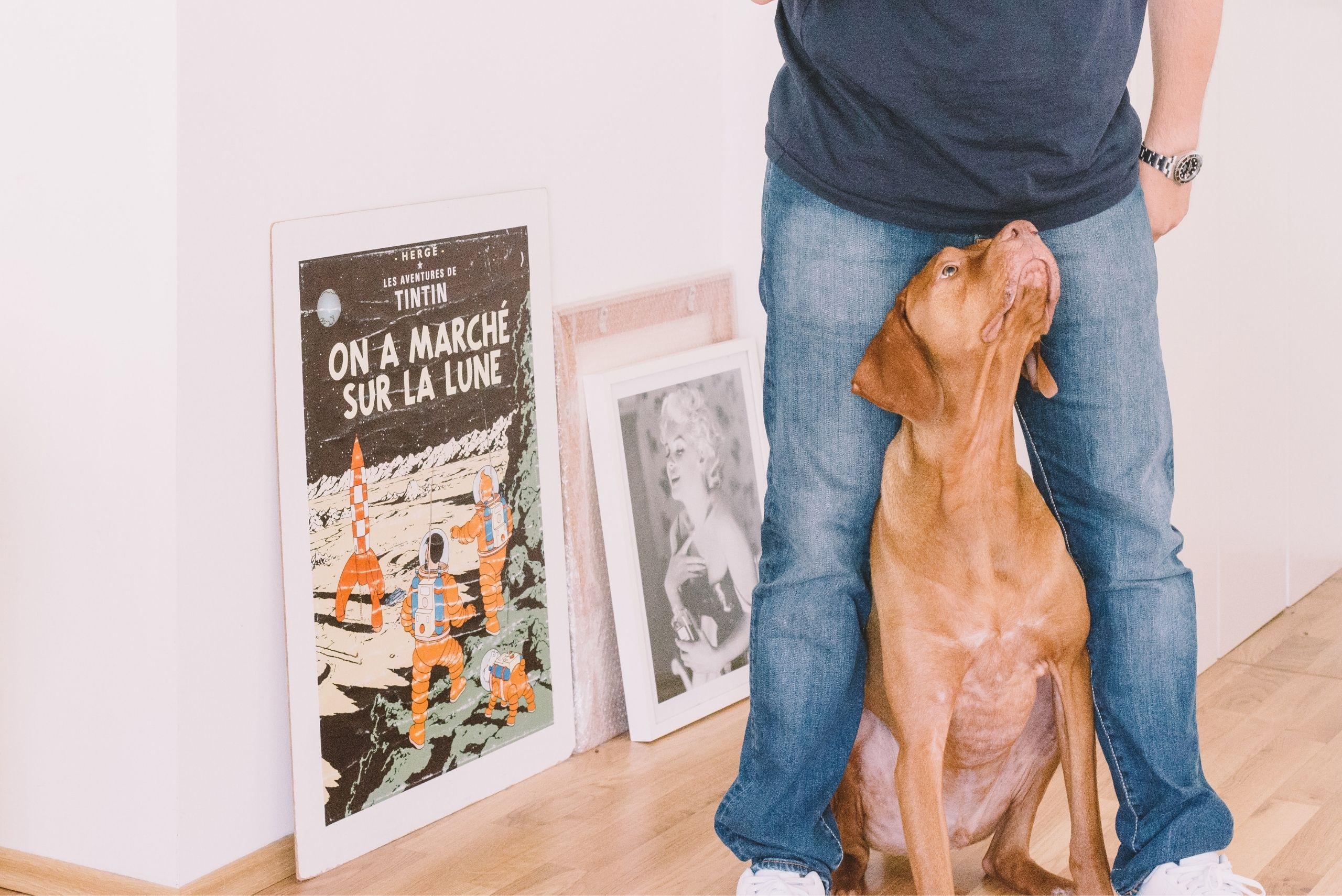 Person teaching dog tricks