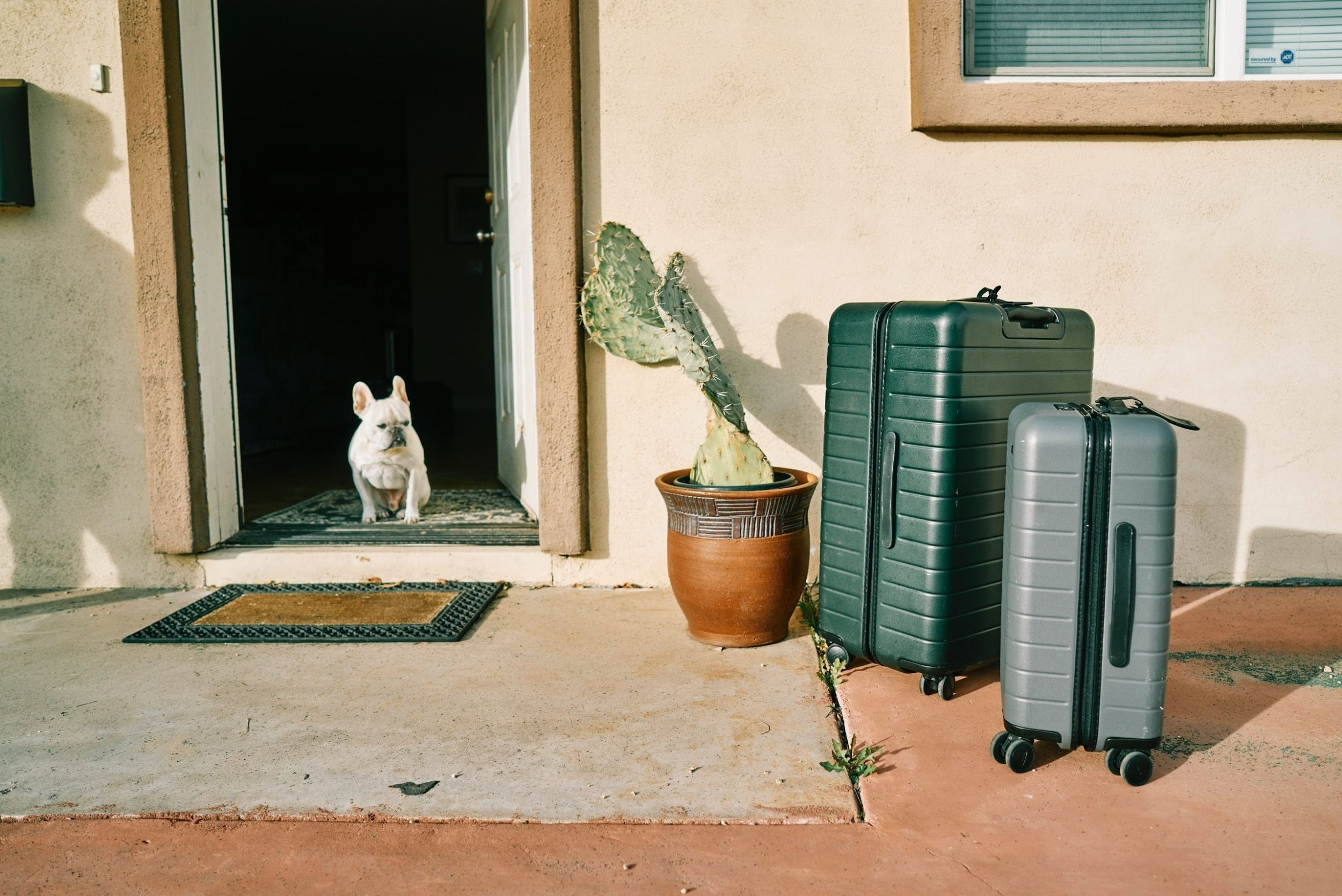 Dog boarding about to travel