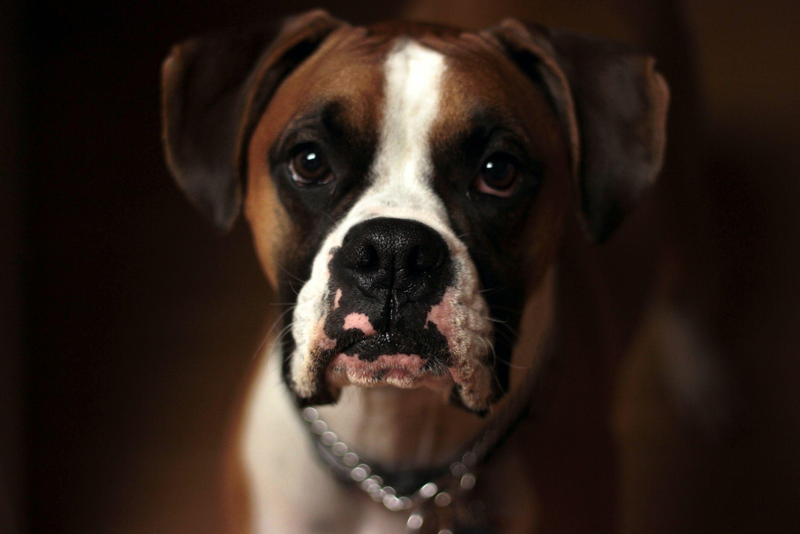 dog-dominance