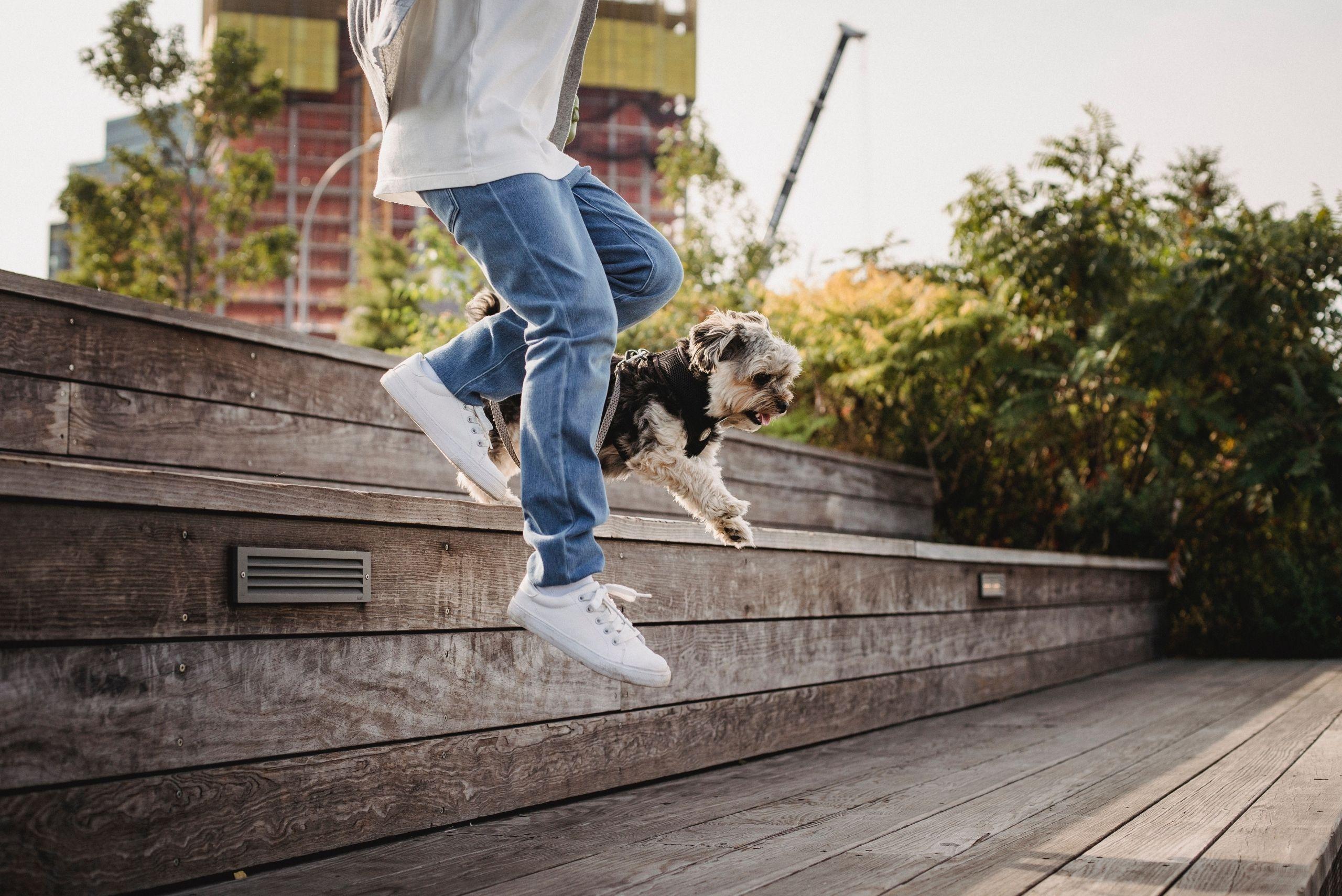 fun-dog-activities