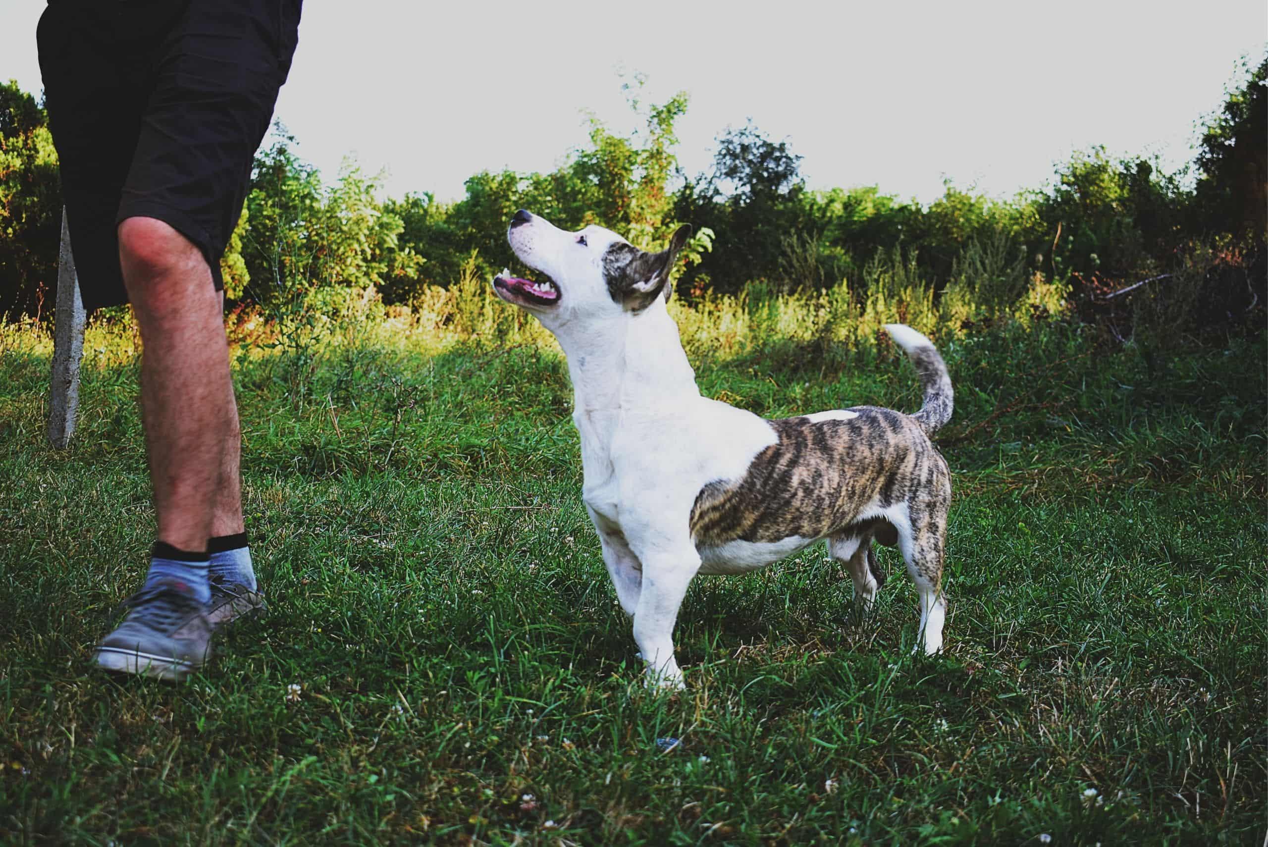 train-your-dog-off-leash-recall