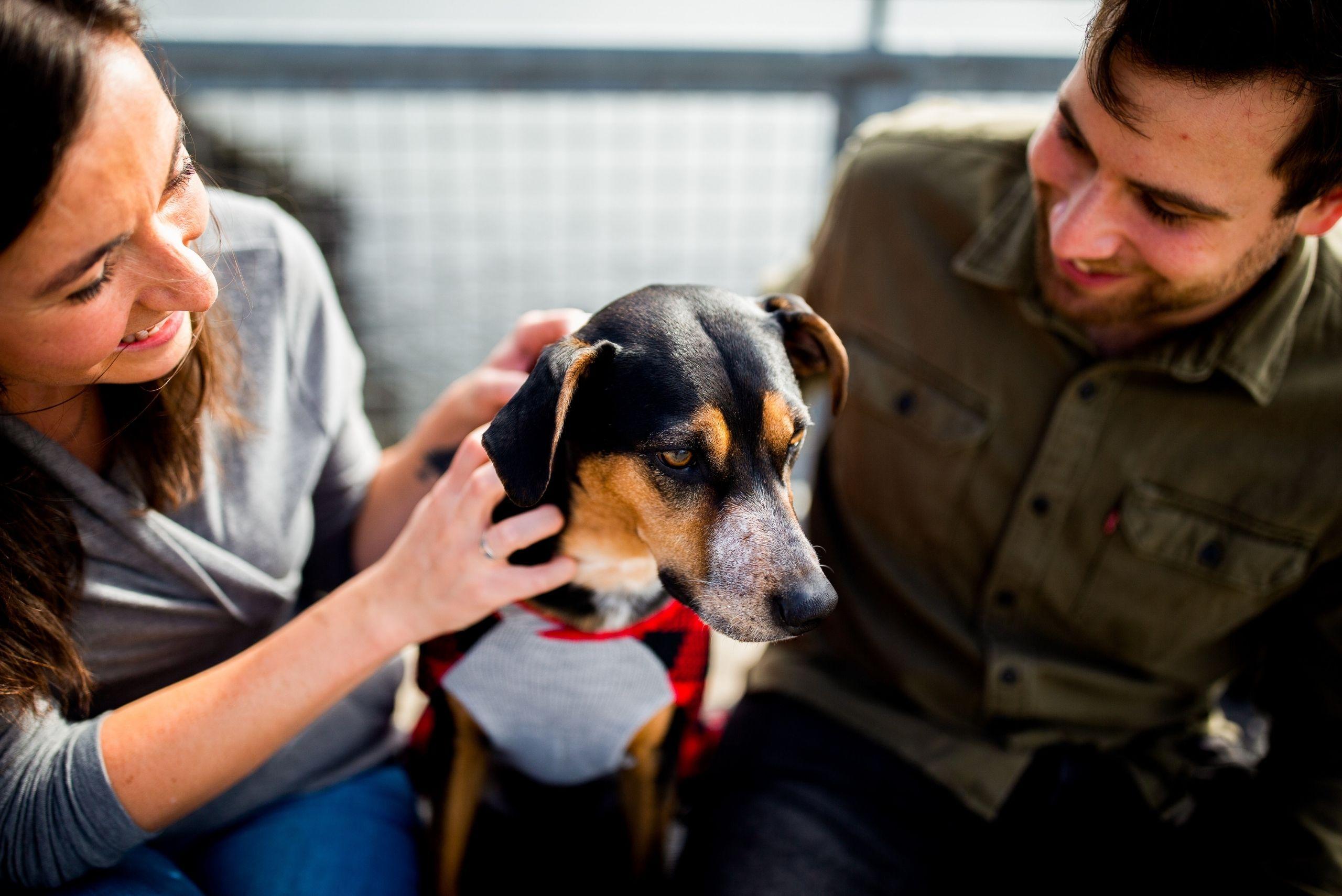 choosing-the-best-dog-breed