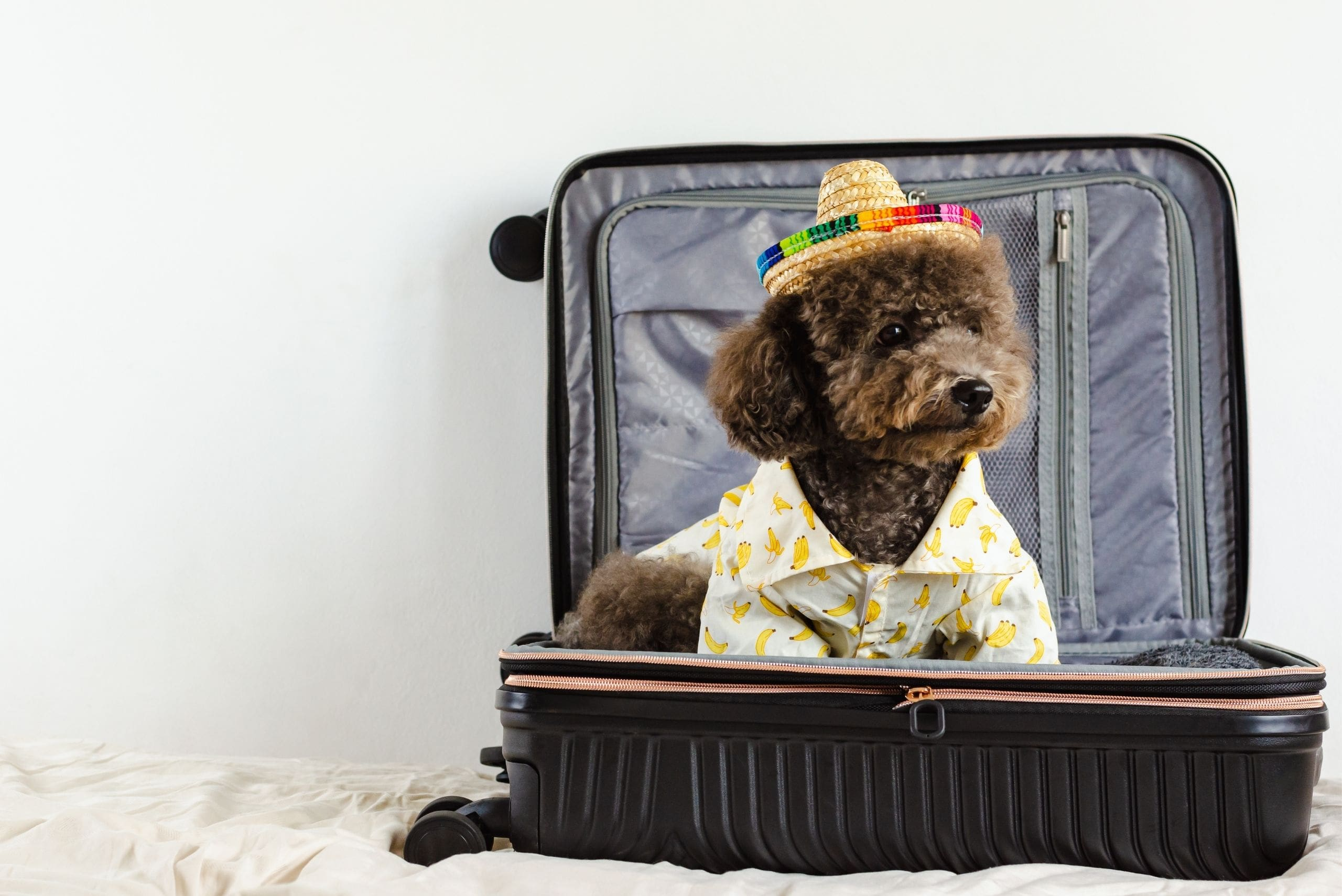 dog-friendly-vacations-guide