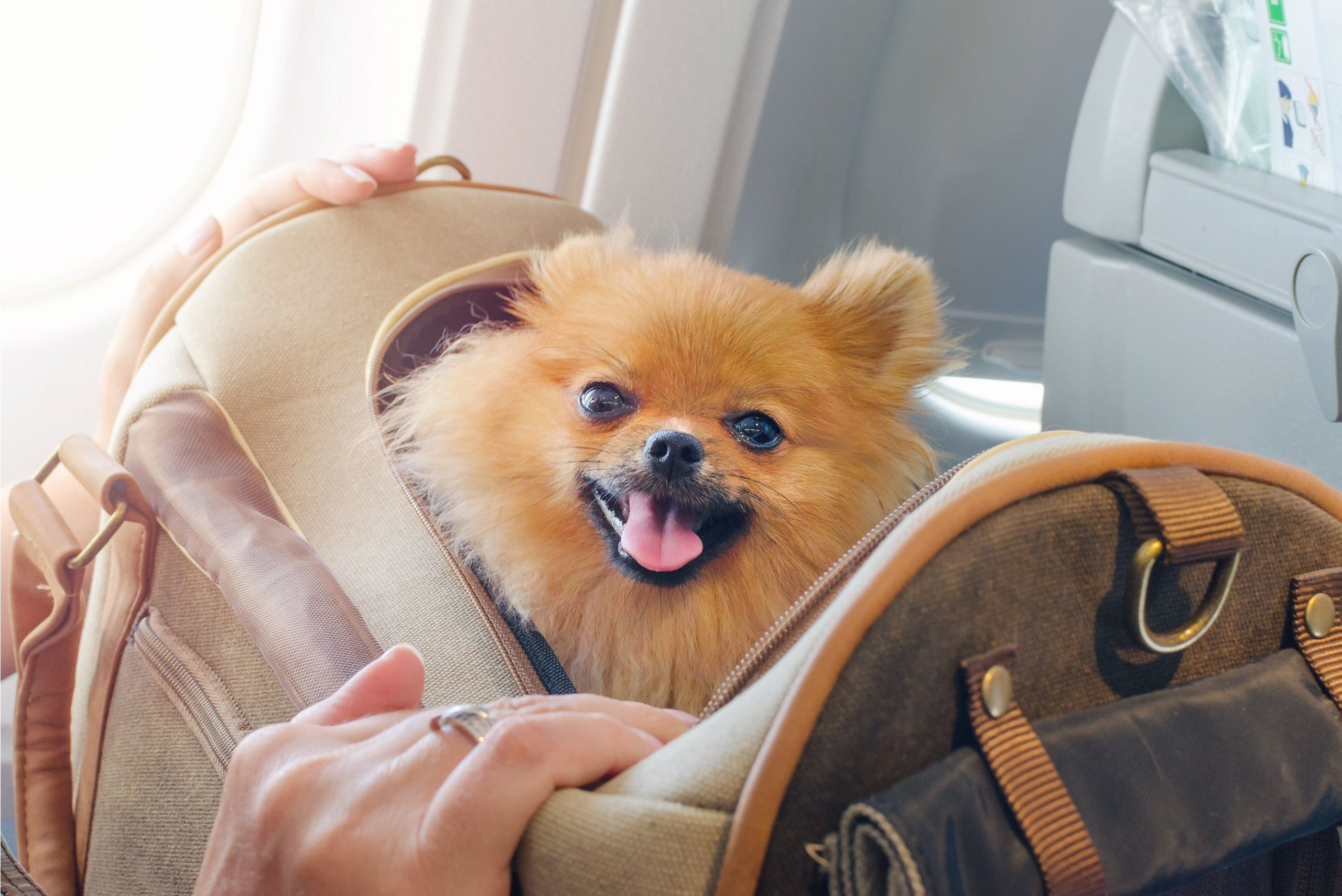 tips-for-flying-with-a-dog