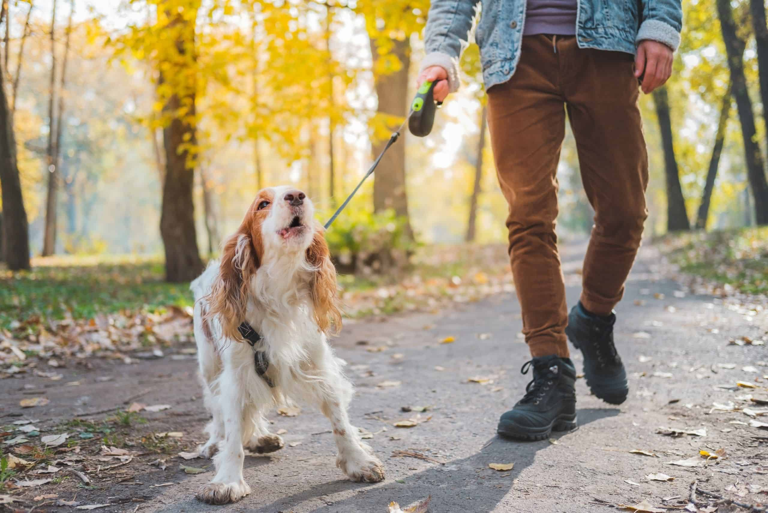 how-to-get-a-dog-to-stop-barking-at-people