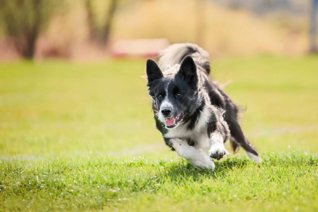 causes-of-dog-darting
