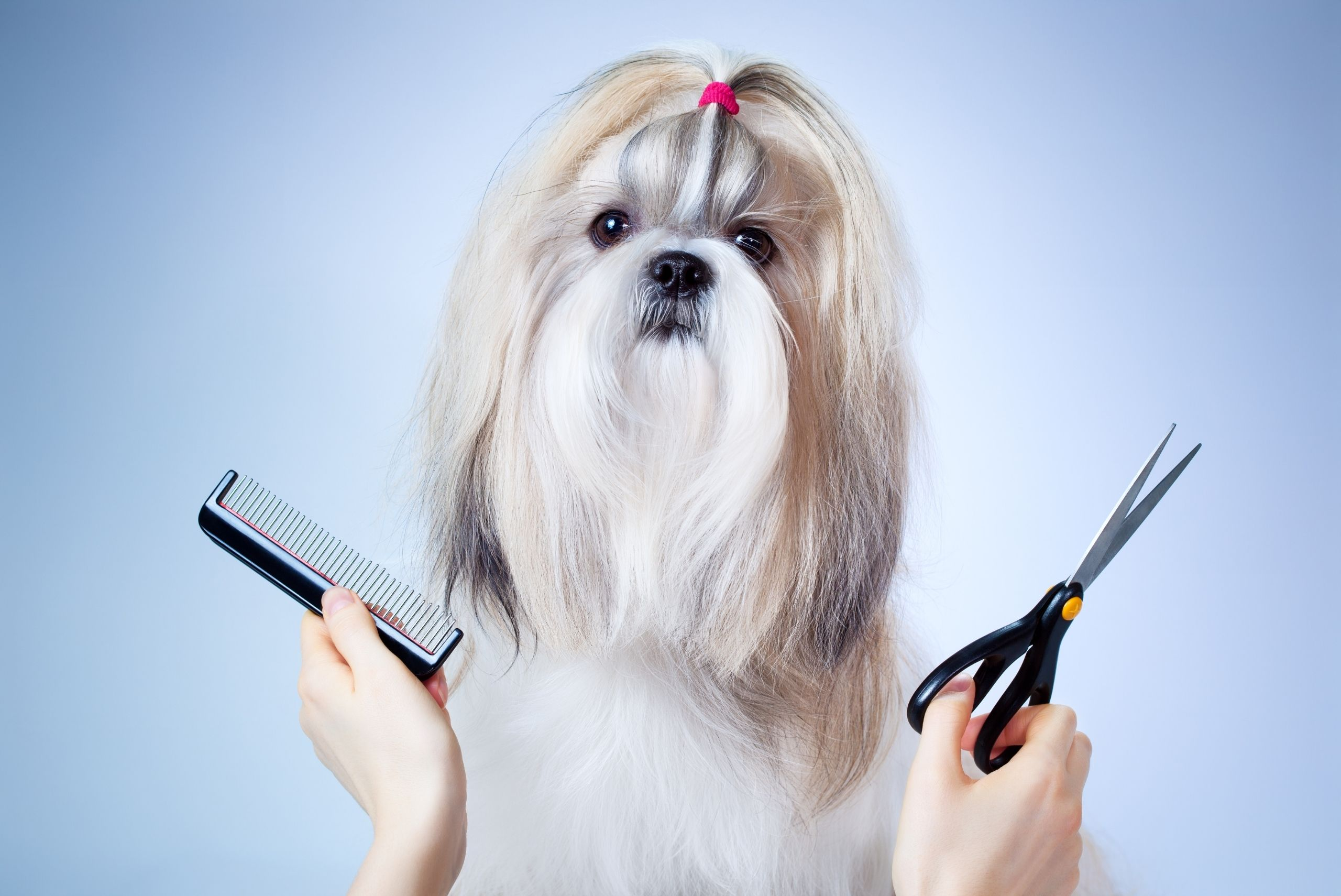 groom-your-dog-at-home-pick-the-right-tools