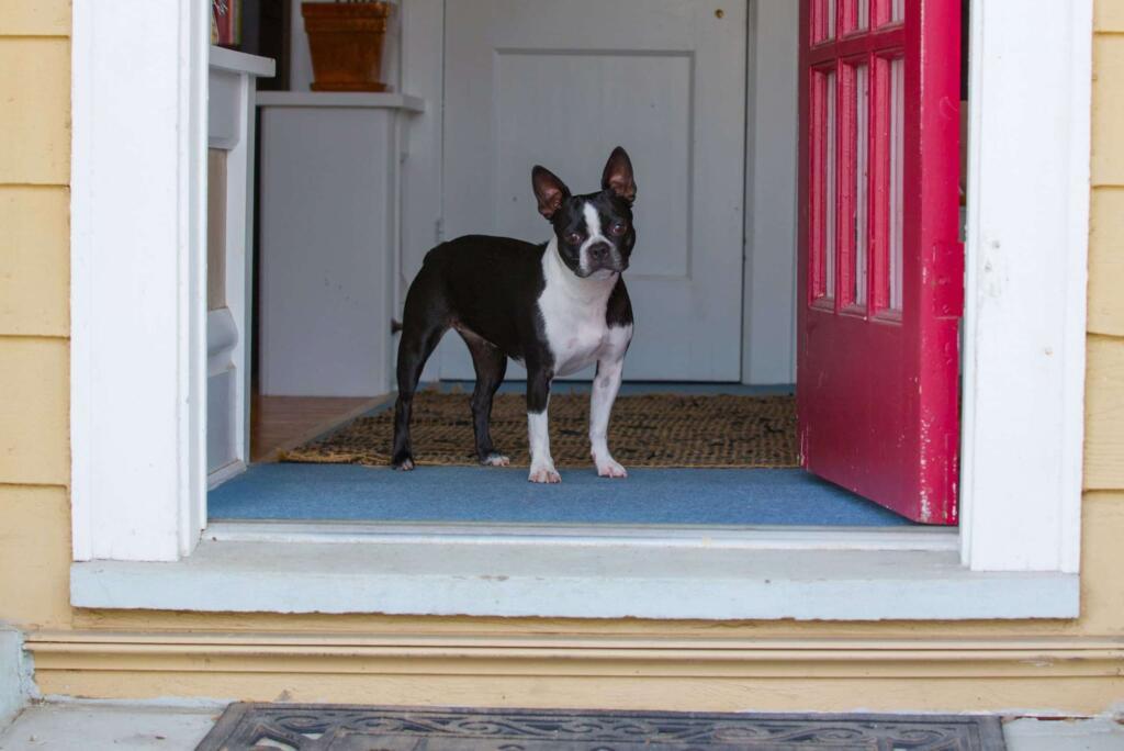 how-to-prevent-dog-darting