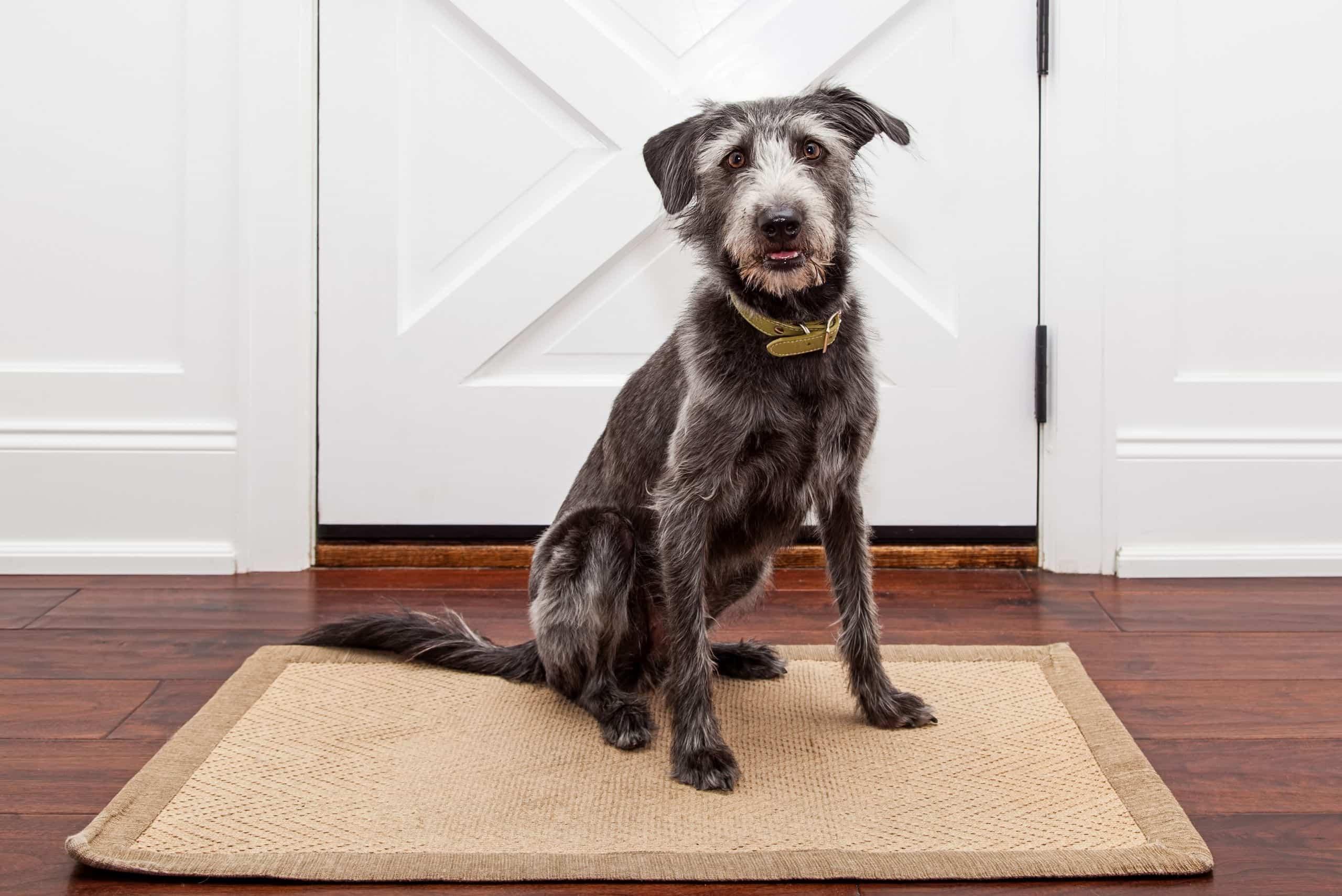 prevent-dog-darting