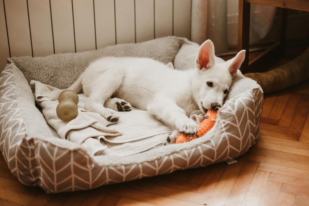 prevent-separation-anxiety-in-puppies-chew-toys
