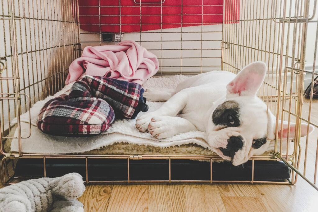 prevent-separation-anxiety-in-puppies-crate-training