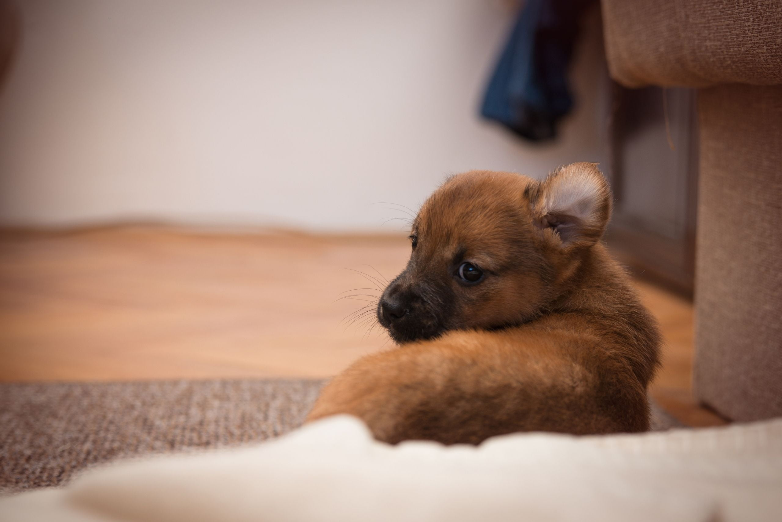 prevent-separation-anxiety-in-puppies