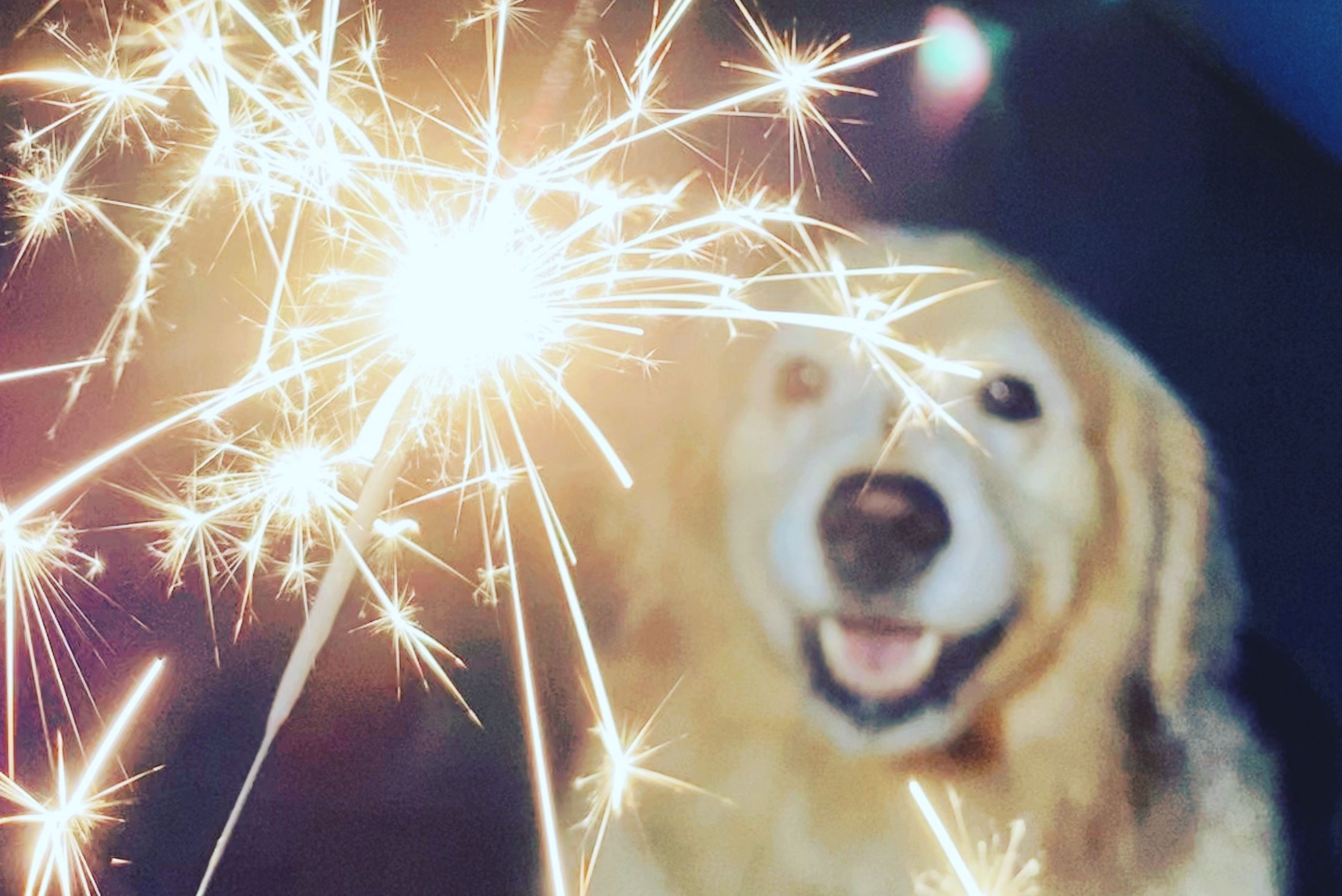 why-are-dogs-scared-of-fireworks