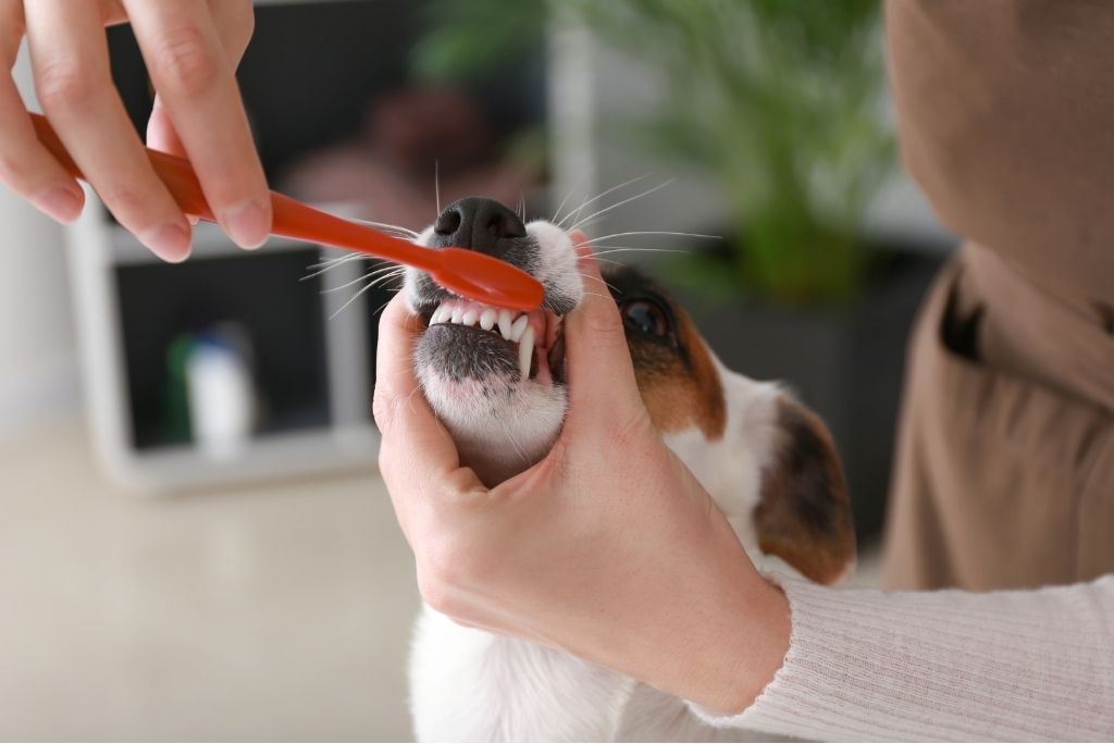 groom-your-dog-at-home-brushing-teeth