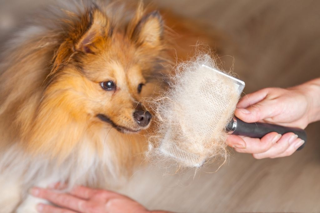 groom-your-dog-at-home-brushing