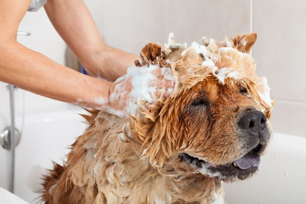 groom-your-dog-at-home