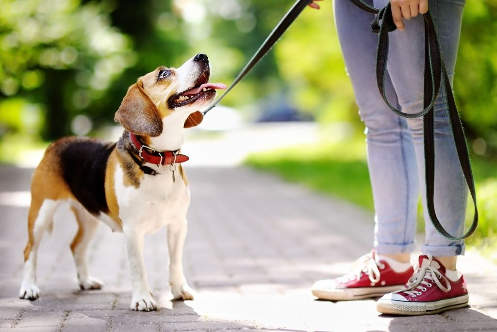 what-to-do-when-your-dog-runs-away-from-you-leash
