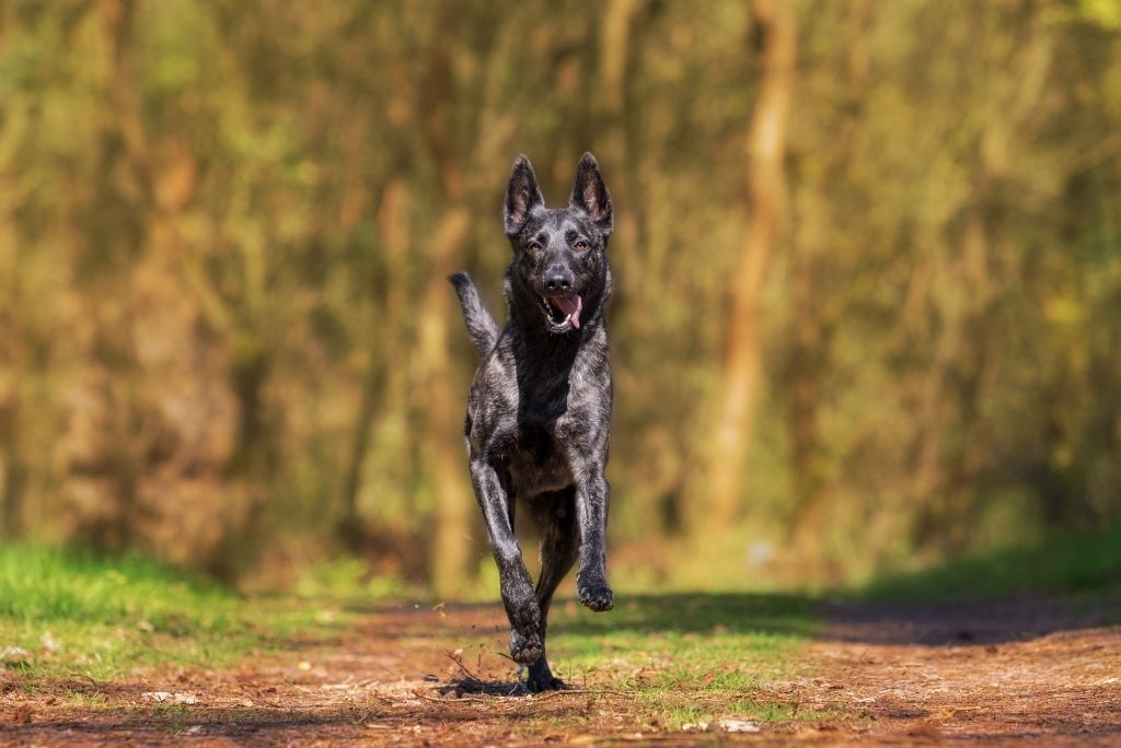 what-to-do-when-your-dog-runs-away-from-you