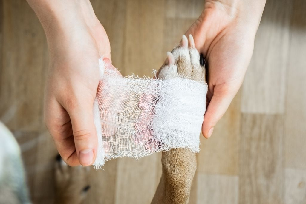 why-do-dogs-lick-their-paws-vet