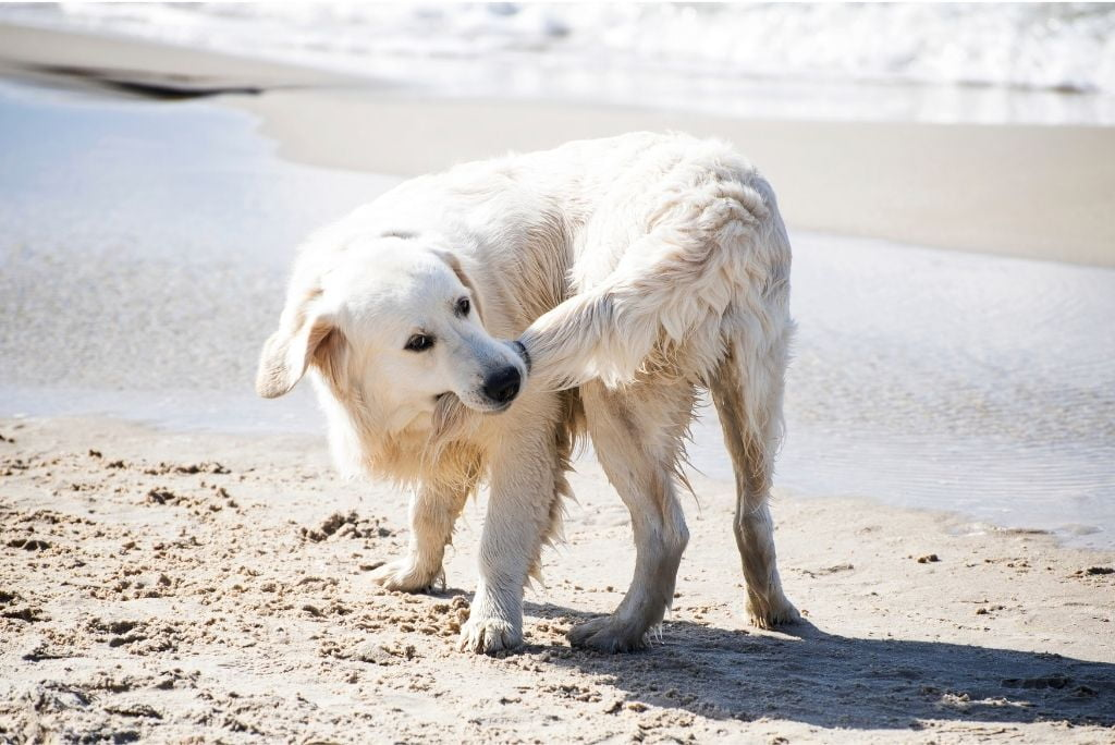questions-about-dogs-dogs-chase-tail