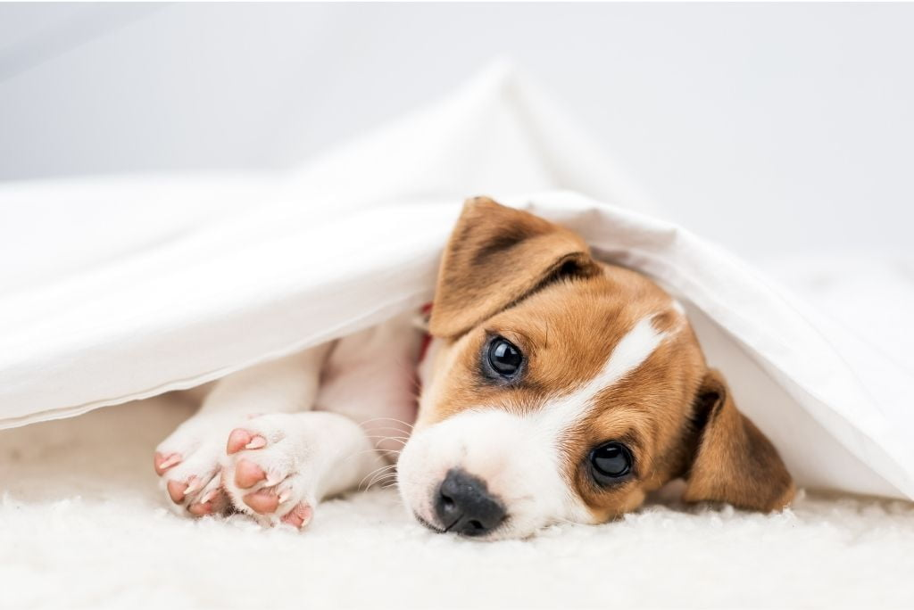 questions-about-dogs-when-do-dogs-stop-growing