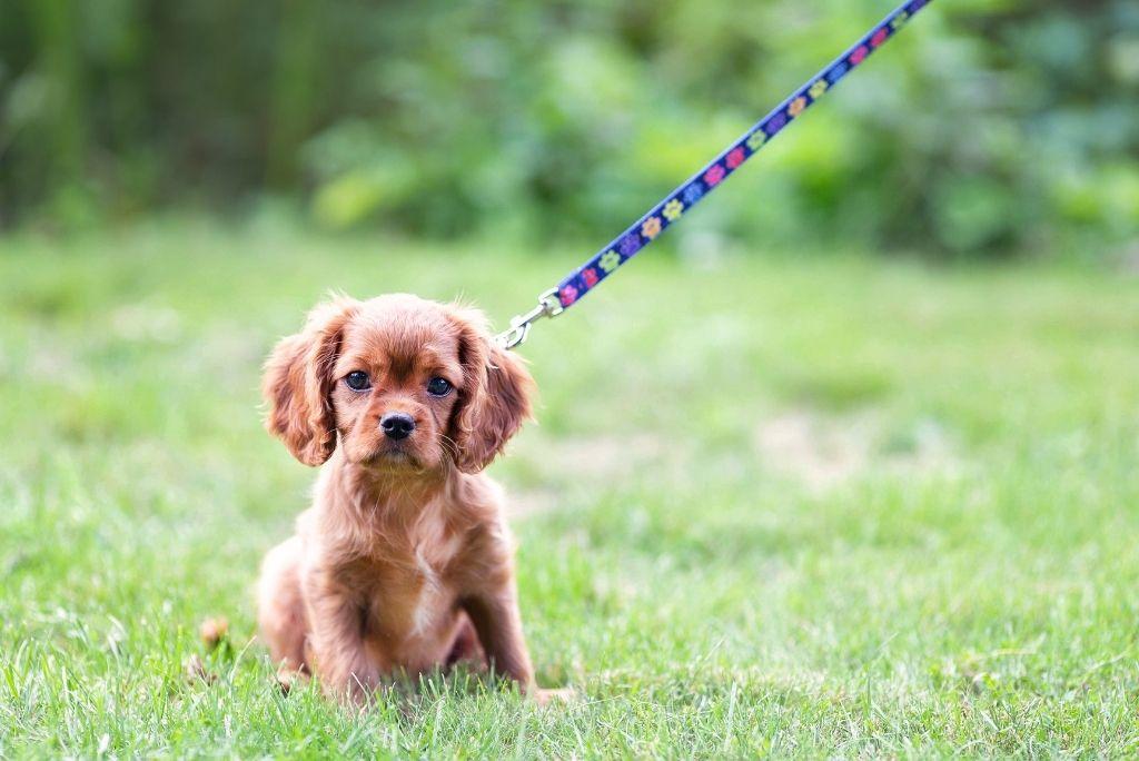 how-to-housebreak-a-dog-potty-breaks